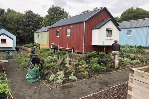 Gardening at the Social Bite Village